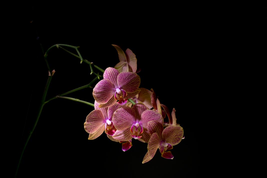 photographie végétal orchidée 01 photographe jb mus