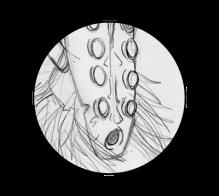 icone-illustration-croquis-2001-2-jb-mus